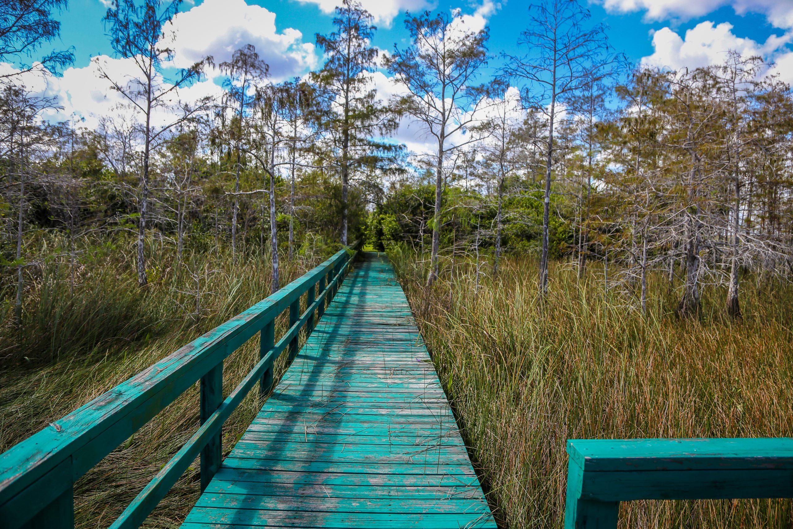Wooden walkway over Everglades