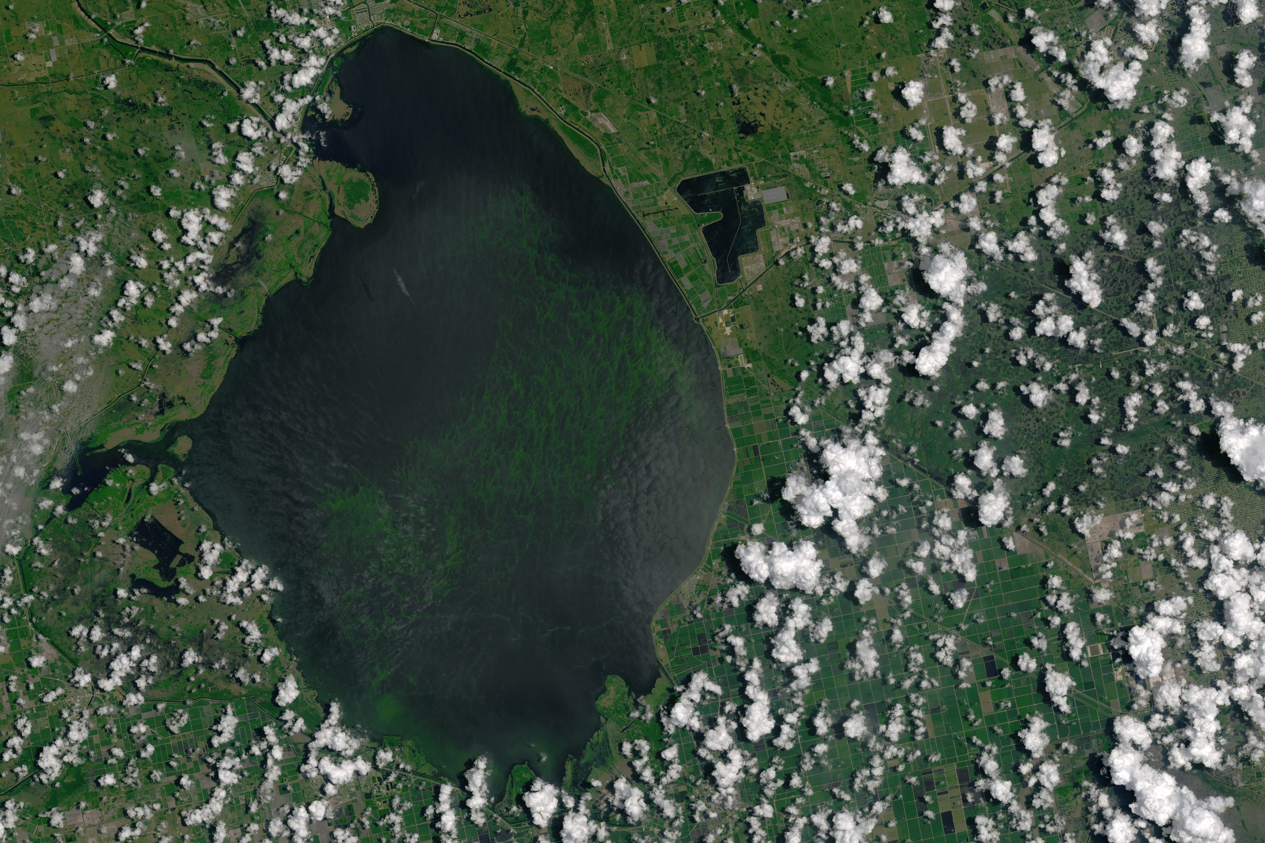 Everglades algae bloom